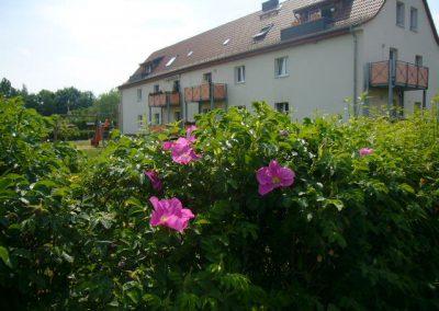 August-Bebel-Strasse 013